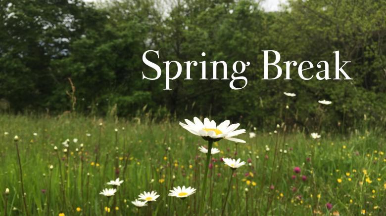Spring Break - wild flowers in asturias