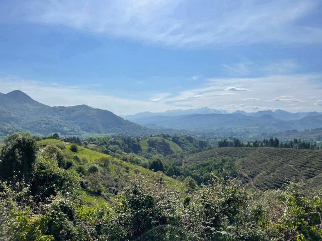 Views of the Picos