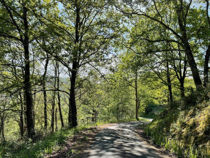 El bosque mientras caminas hacia La Cotariella