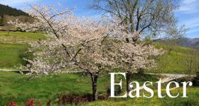 Easter special offer el gran sueño