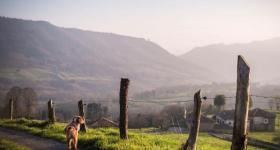 la roza desde la formiga Asturias