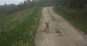 Carson running round Pico Viyao